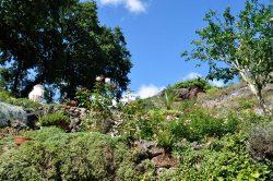 Blick in den Skulpturenpark